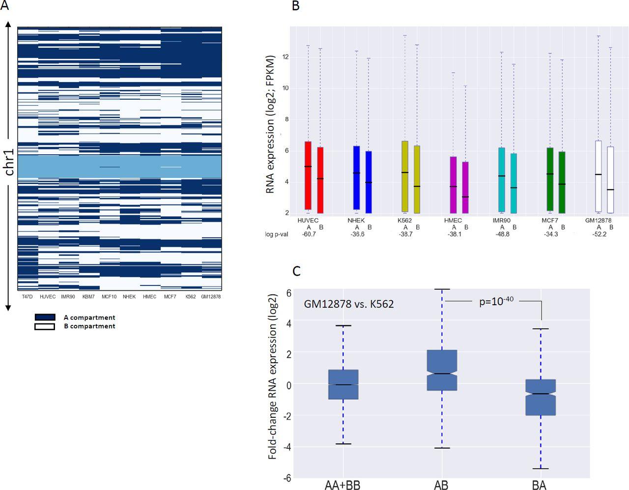 Genomic meta-analysis of the interplay between 3D chromatin