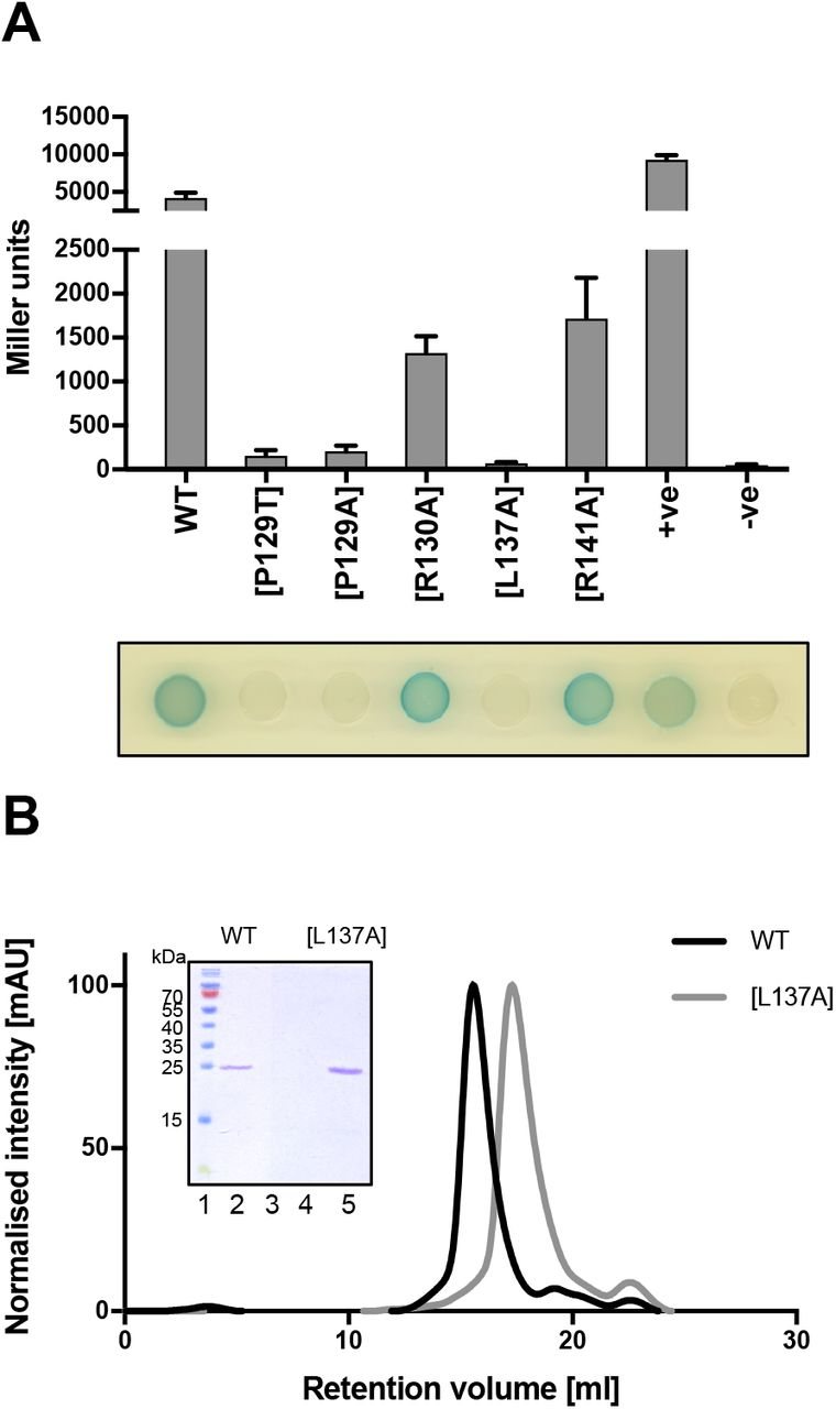 QstR-dependent regulation of natural competence and type VI