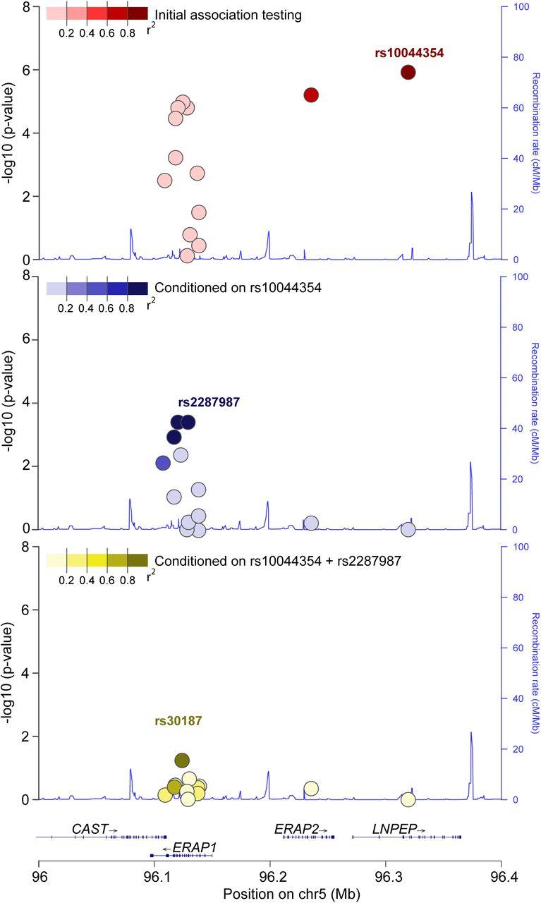 Functionally distinct ERAP1 and ERAP2 are a hallmark of HLA