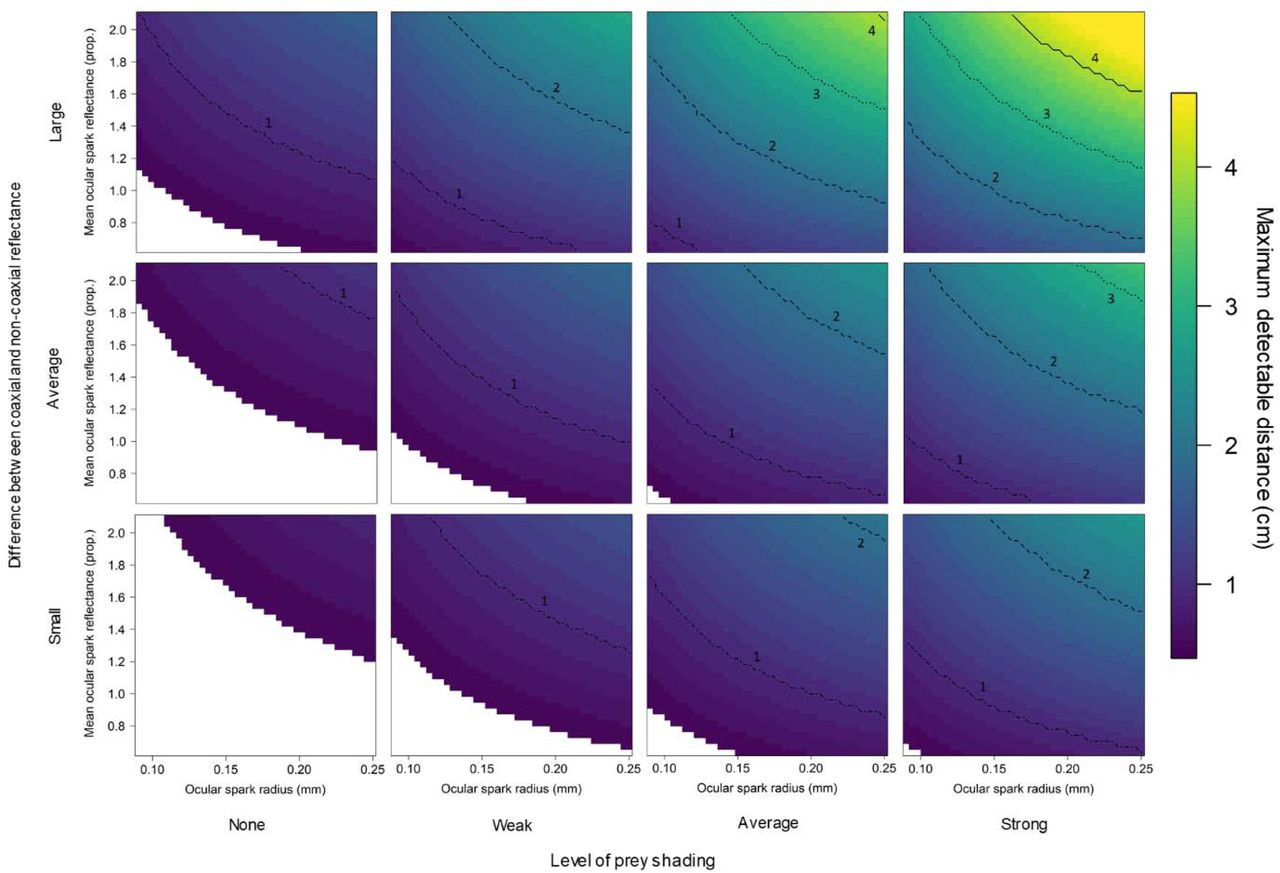 Visual modelling validates prey detection by means of