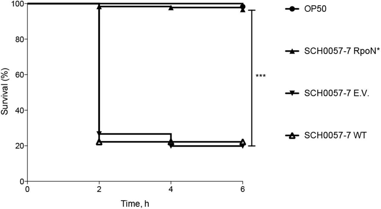 Blocking the alternative sigma factor RpoN reduces virulence