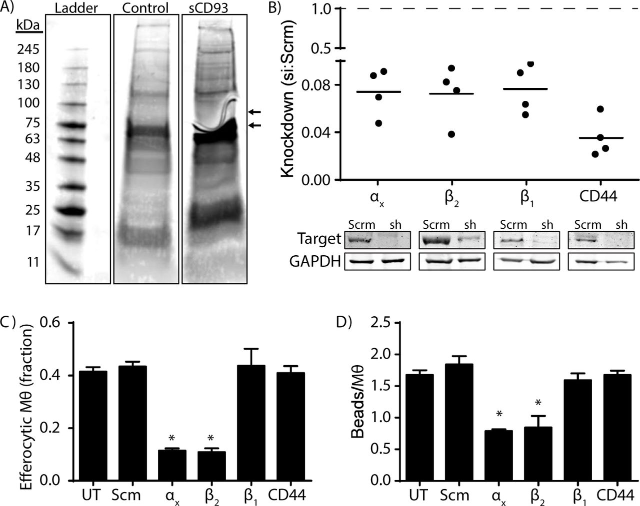 Soluble CD93 is an Apoptotic Cell Opsonin Recognized by the