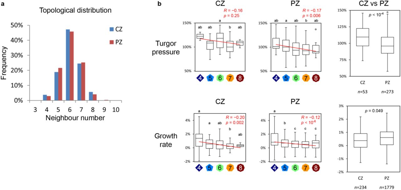 Cellular heterogeneity in pressure and growth emerges from