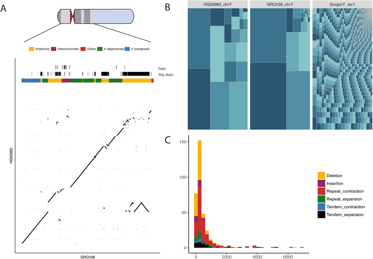 Selective single molecule sequencing and assembly of a human
