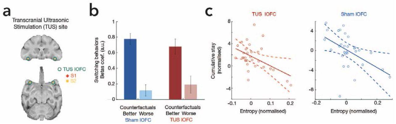 The macaque anterior cingulate cortex translates counterfactual