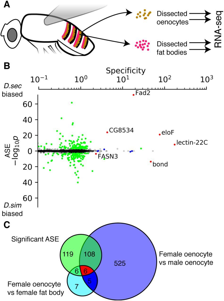 Tissue-specific cis-regulatory divergence implicates a fatty acid