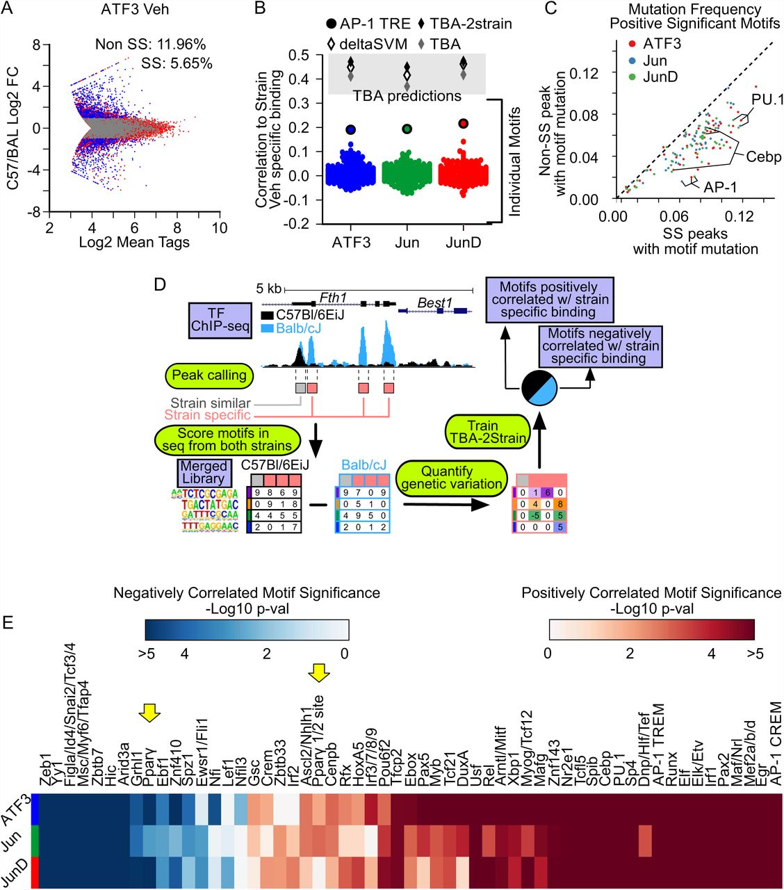 Diverse motif ensembles specify non-redundant DNA binding activities