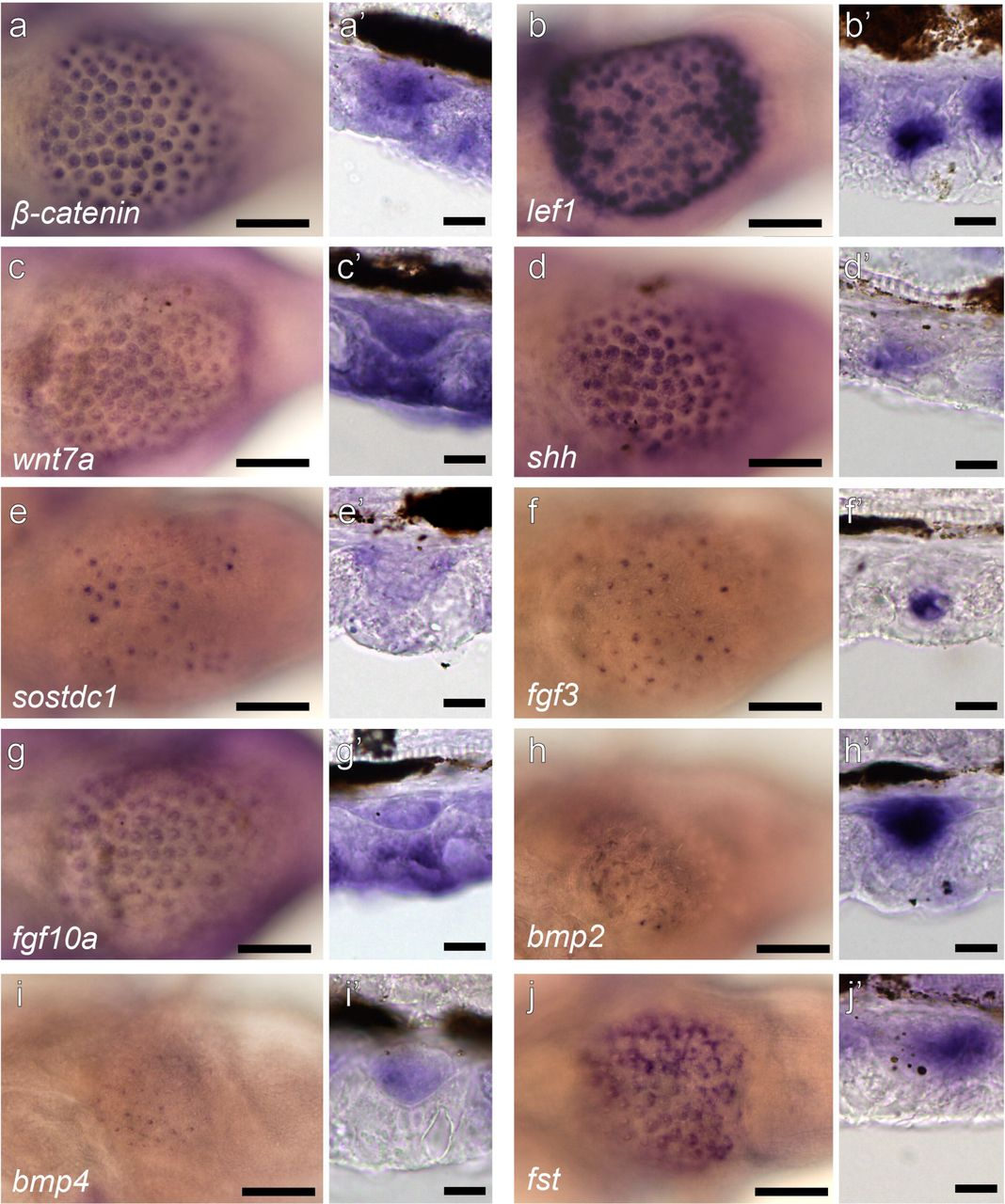 Evolution and developmental diversity of skin spines in