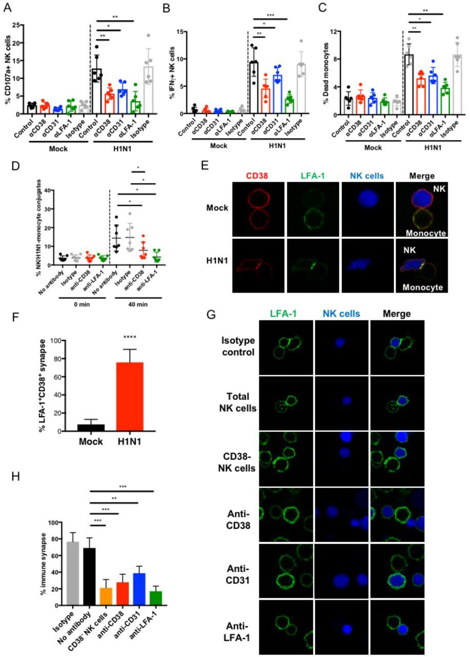 CD38 is a key regulator of enhanced NK cell immune responses during