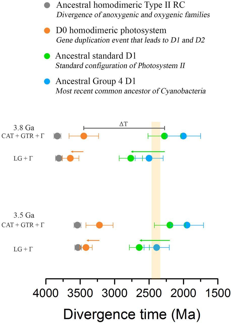 Early Archean origin of Photosystem II   bioRxiv