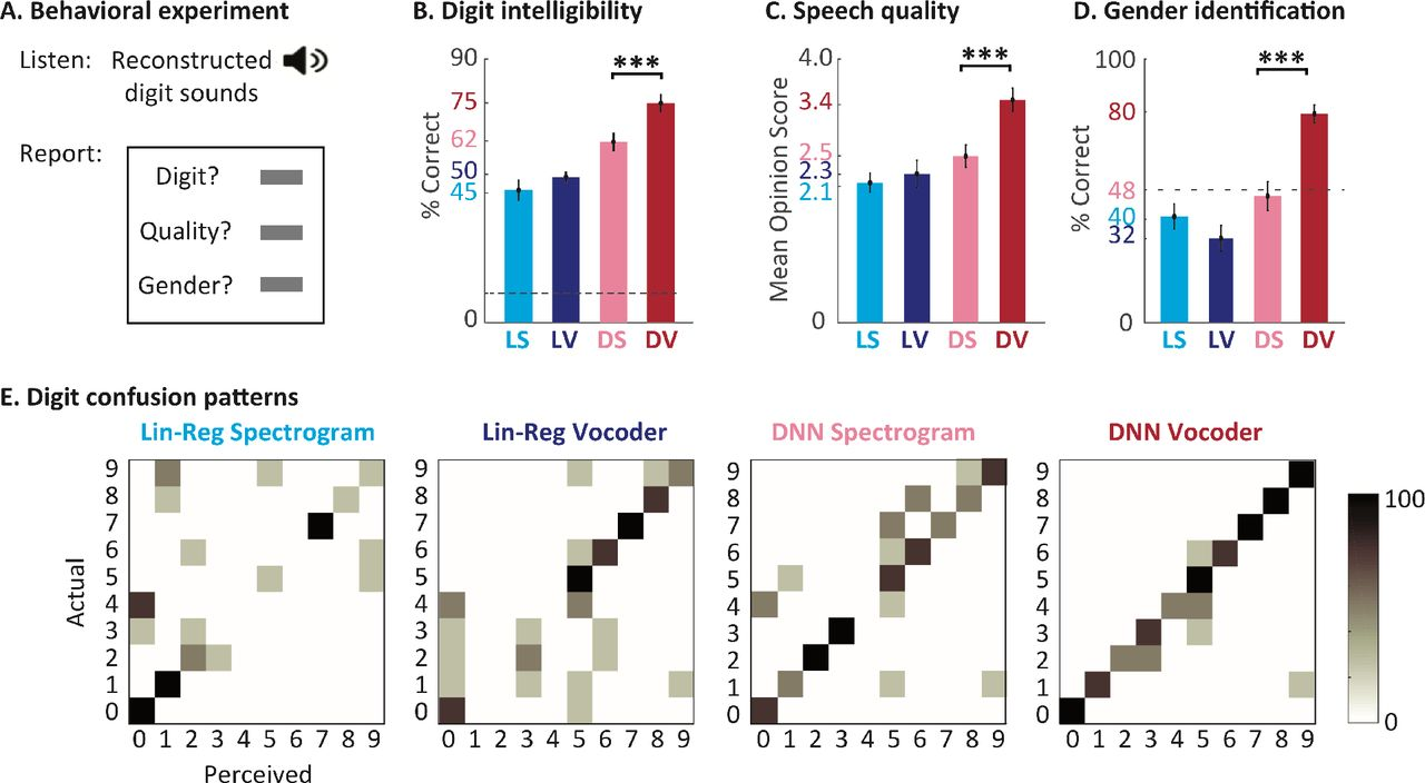 Reconstructing intelligible speech from the human auditory cortex
