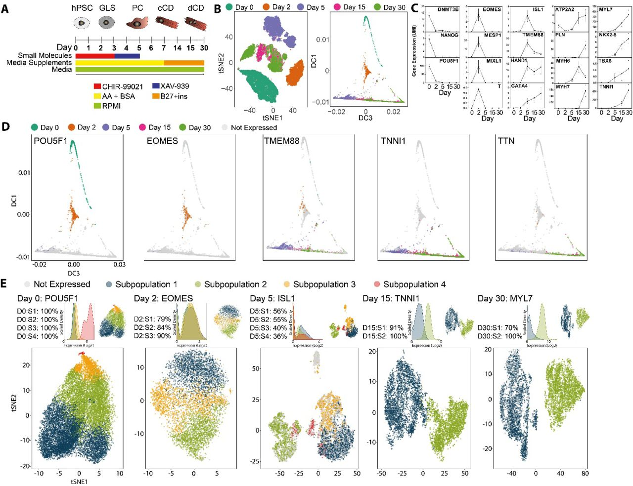 Analysis of cardiac differentiation at single cell
