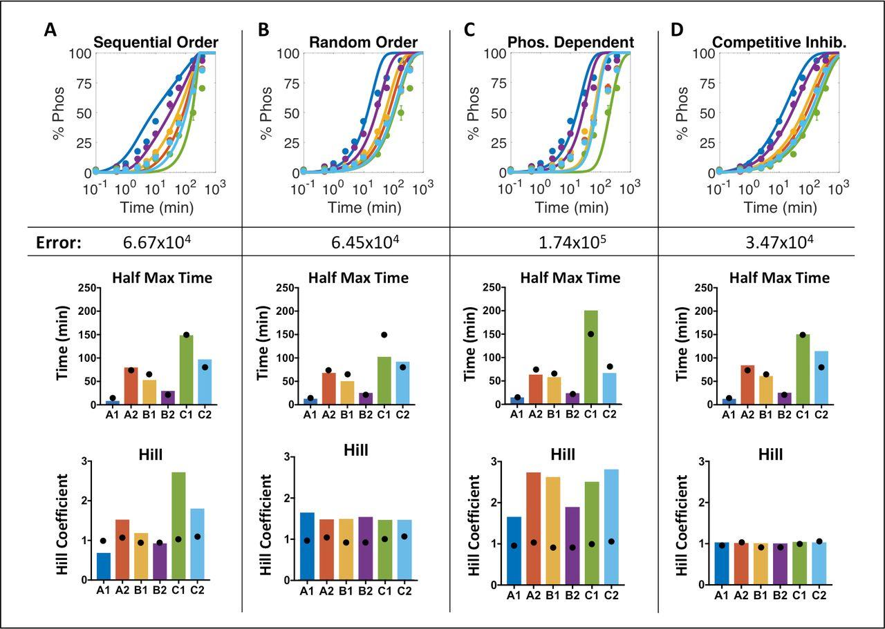Computational model of chimeric antigen receptors explains