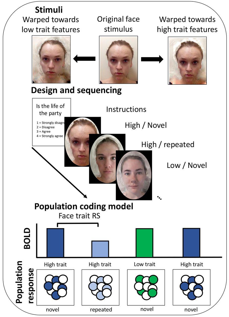 fMRI repetition suppression reveals no sensitivity to trait