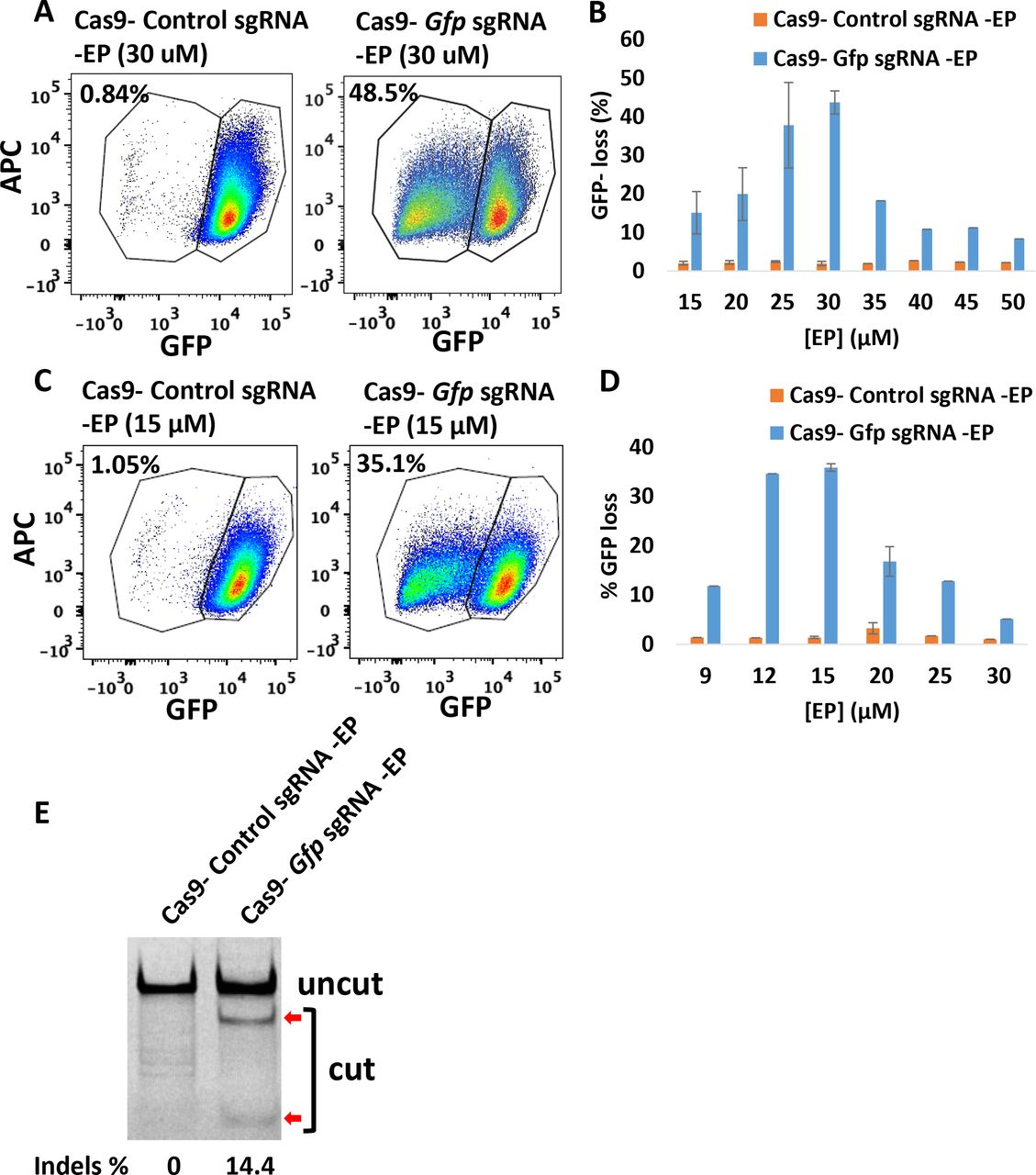 Efficient gene deletion achieved following the treatment with CriPs targeting Gfp in primary GFP pre-adipocytes isolated from GFP mice. (A, C) Flow cytometry data of primary GFP pre-adipocytes treated with CriPs formulated in (A) <t>NEBuffer</t> 3 or (C) PBS. Cas9-sgRNA: 100 nM. (B, D) Different concentrations of EP with 100 nM of Cas9-sgRNA formulated in (B) NEBuffer 3 or (D) PBS. (E) Percent Indels measurements by T7E1 assay in genomic DNA isolated from primary GFP pre-adipocytes. Uncut: 401 bp, Cut: 288 bp + 113 bp.