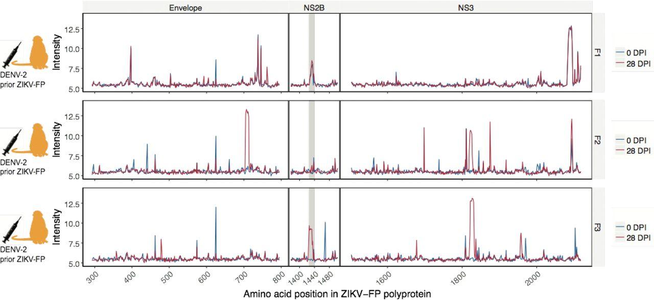 Antibody Responses To The Zika Virus Polyprotein In Pregnant