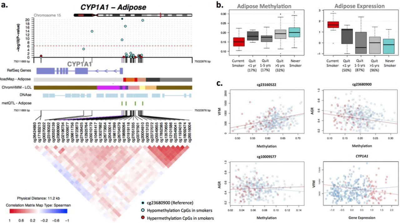 Smoking induces coordinated DNA methylation and gene