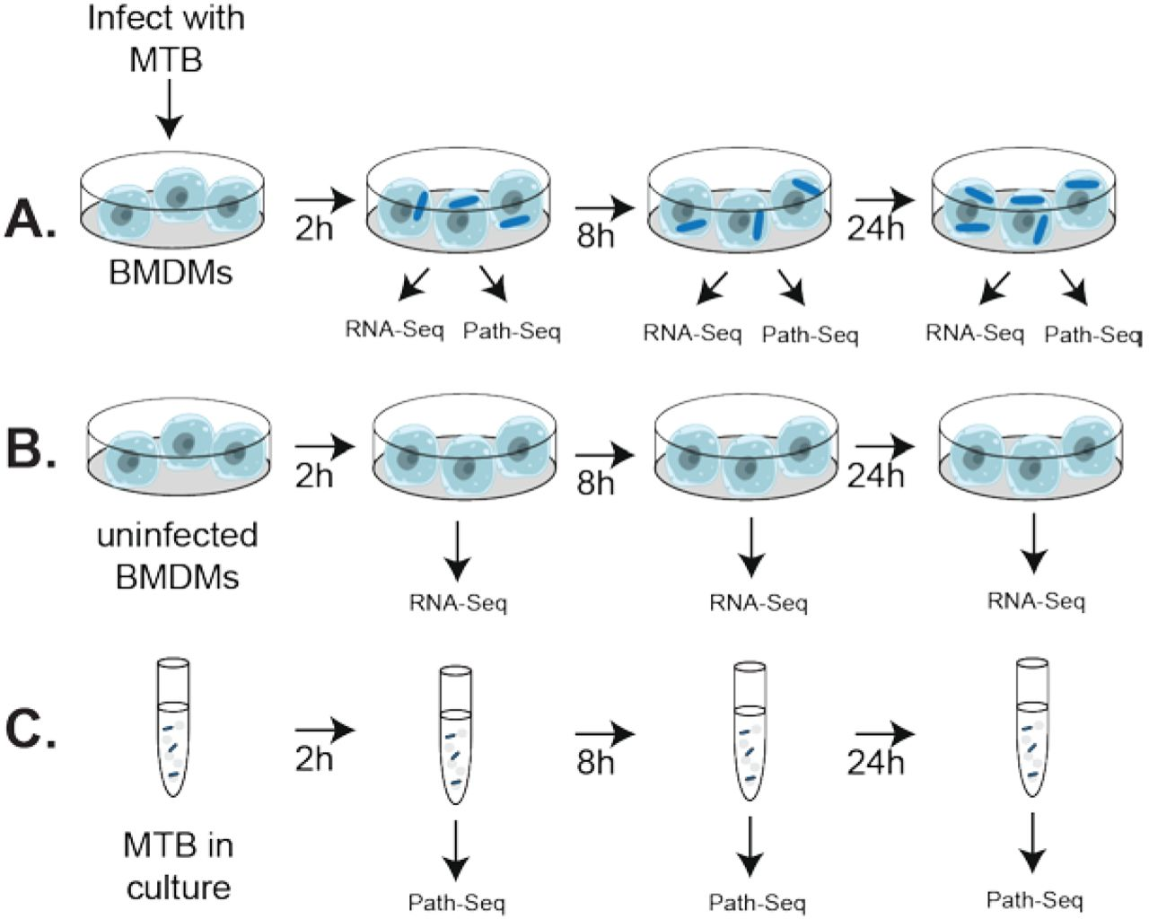 An essential mycolate remodeling program for mycobacterial