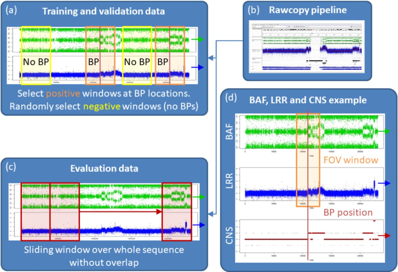 Deep SNP: An End-to-end Deep Neural Network with Attention