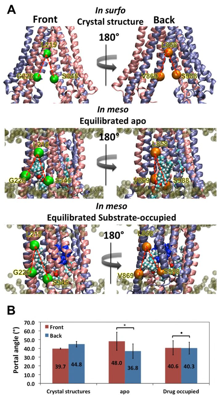 Allosteric Role of Substrate Occupancy Toward the Alignment of P