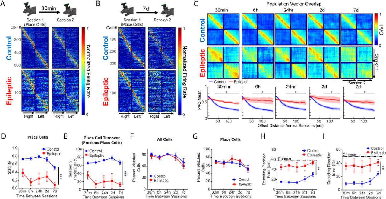 Breakdown of spatial coding and neural synchronization in