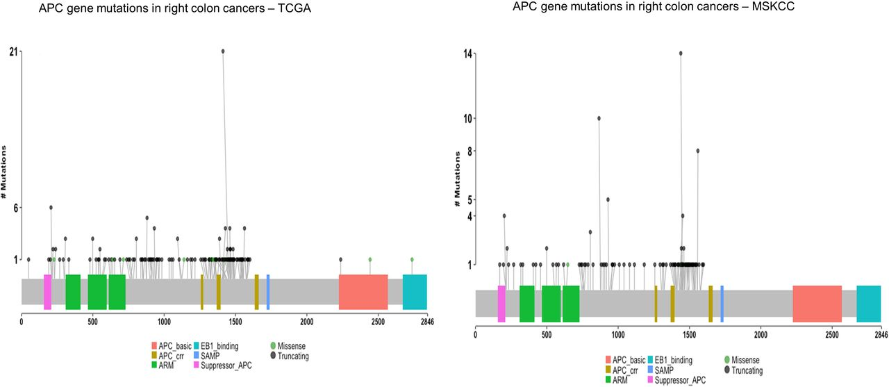 Comparative Proteogenomic Analysis Of Right Sided Colon Cancer Left Sided Colon Cancer And Rectal Cancers Reveal Distinct Mutational Profiles Biorxiv