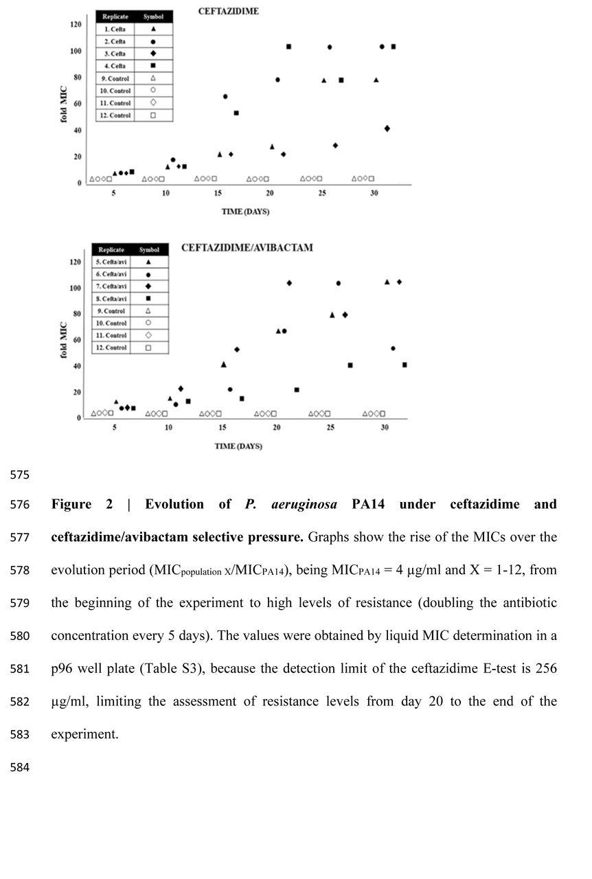 Mutation-driven evolution of Pseudomonas aeruginosa in the