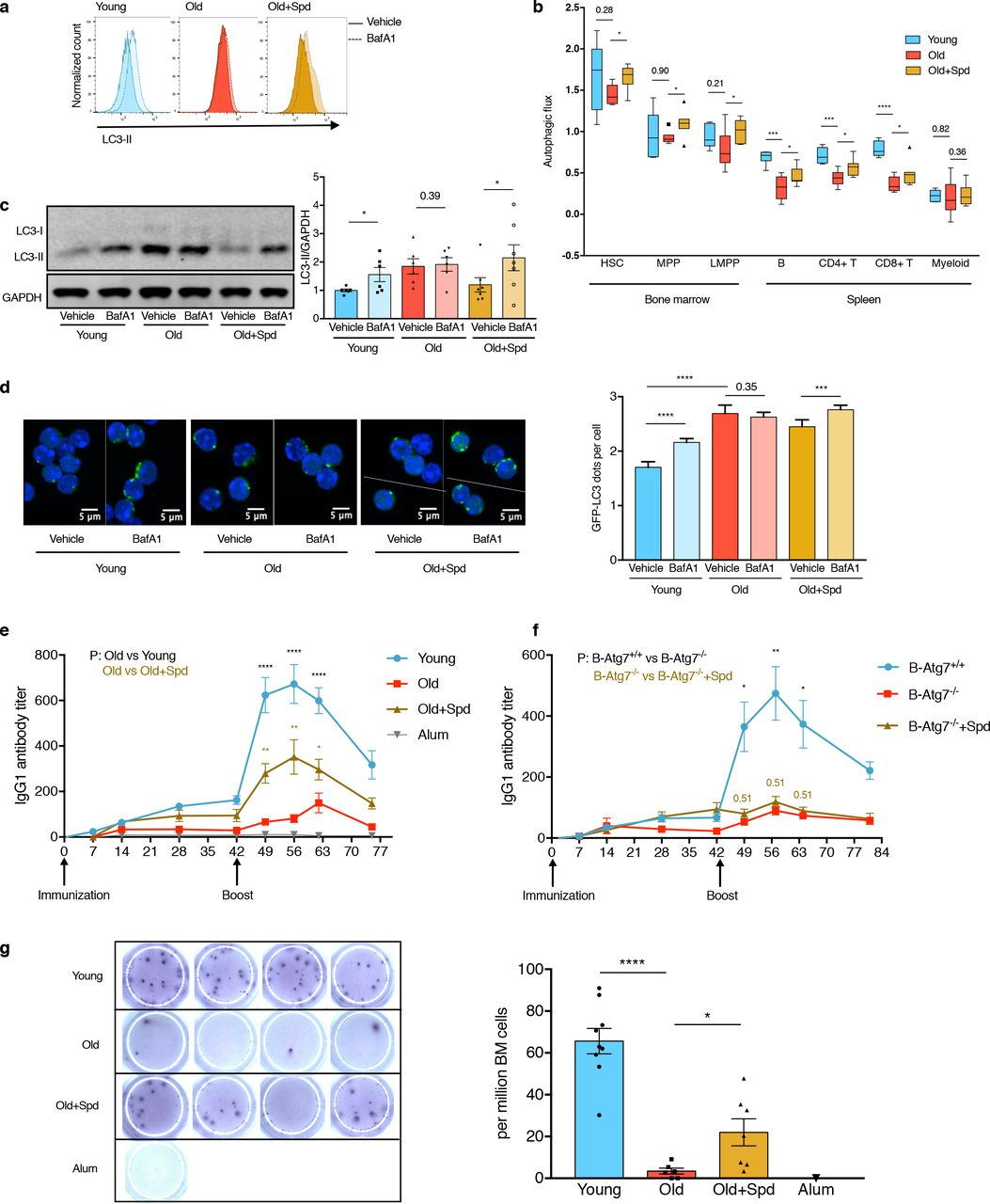 Translational control of TFEB and autophagy via eIF5A