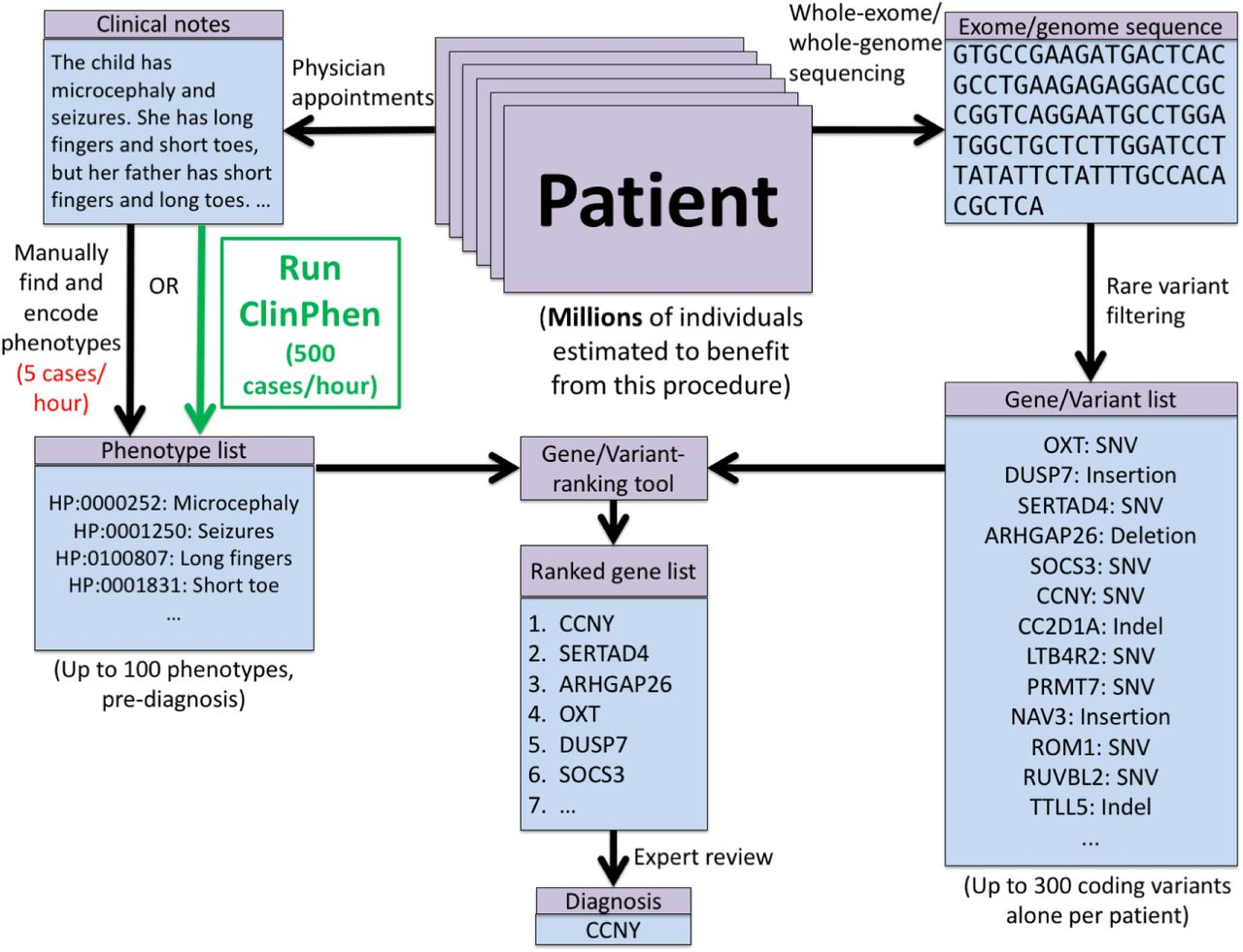 ClinPhen extracts and prioritizes patient phenotypes directly from