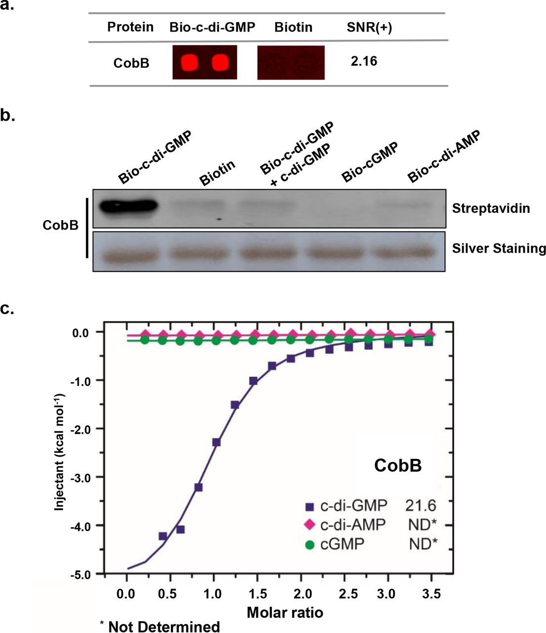 Protein Deacetylase CobB Interplays with c-di-GMP | bioRxiv