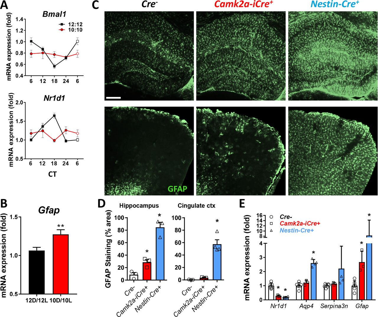 Cell-autonomous regulation of astrocyte activation by the