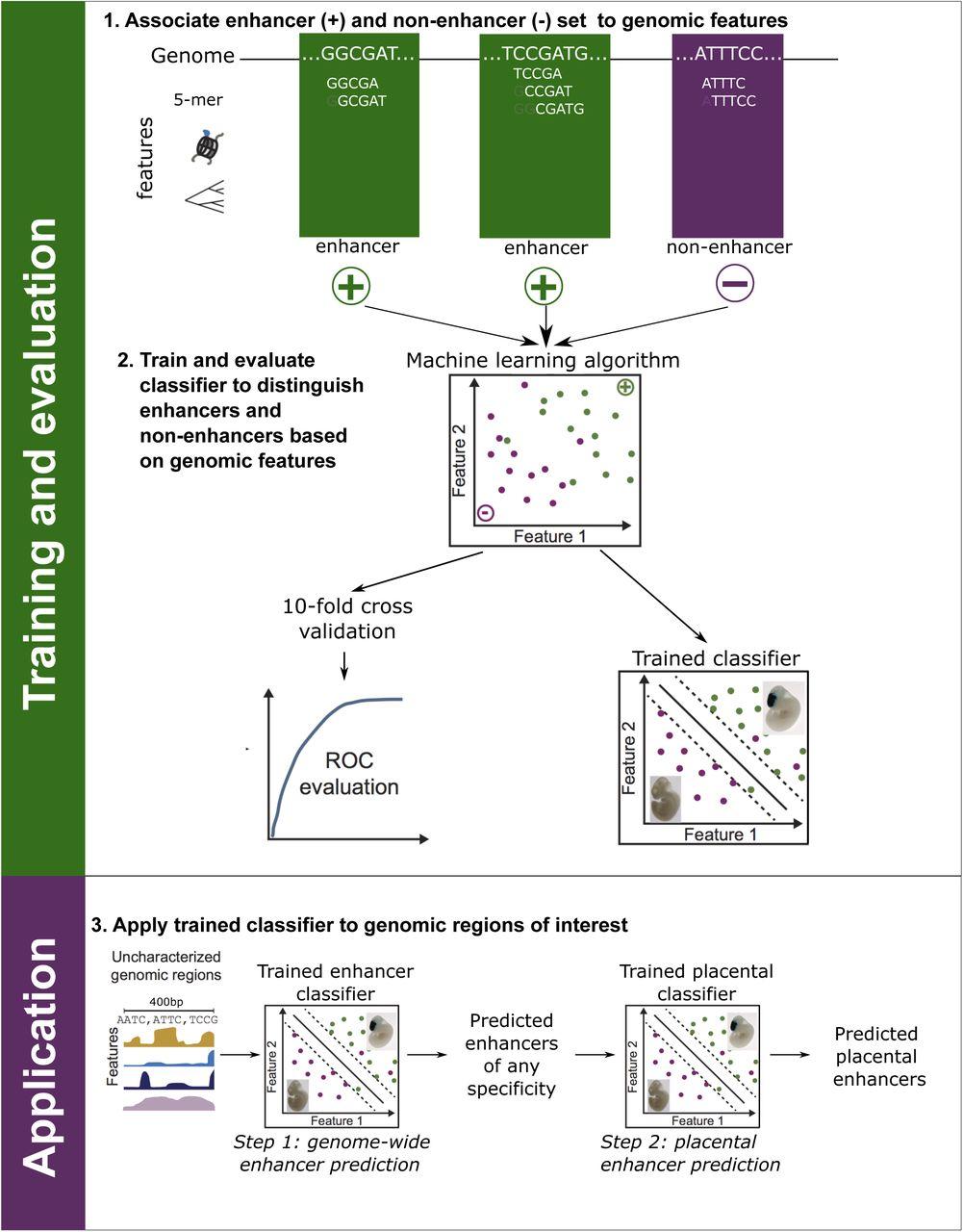 Genome-wide maps of distal gene regulatory regions active in the