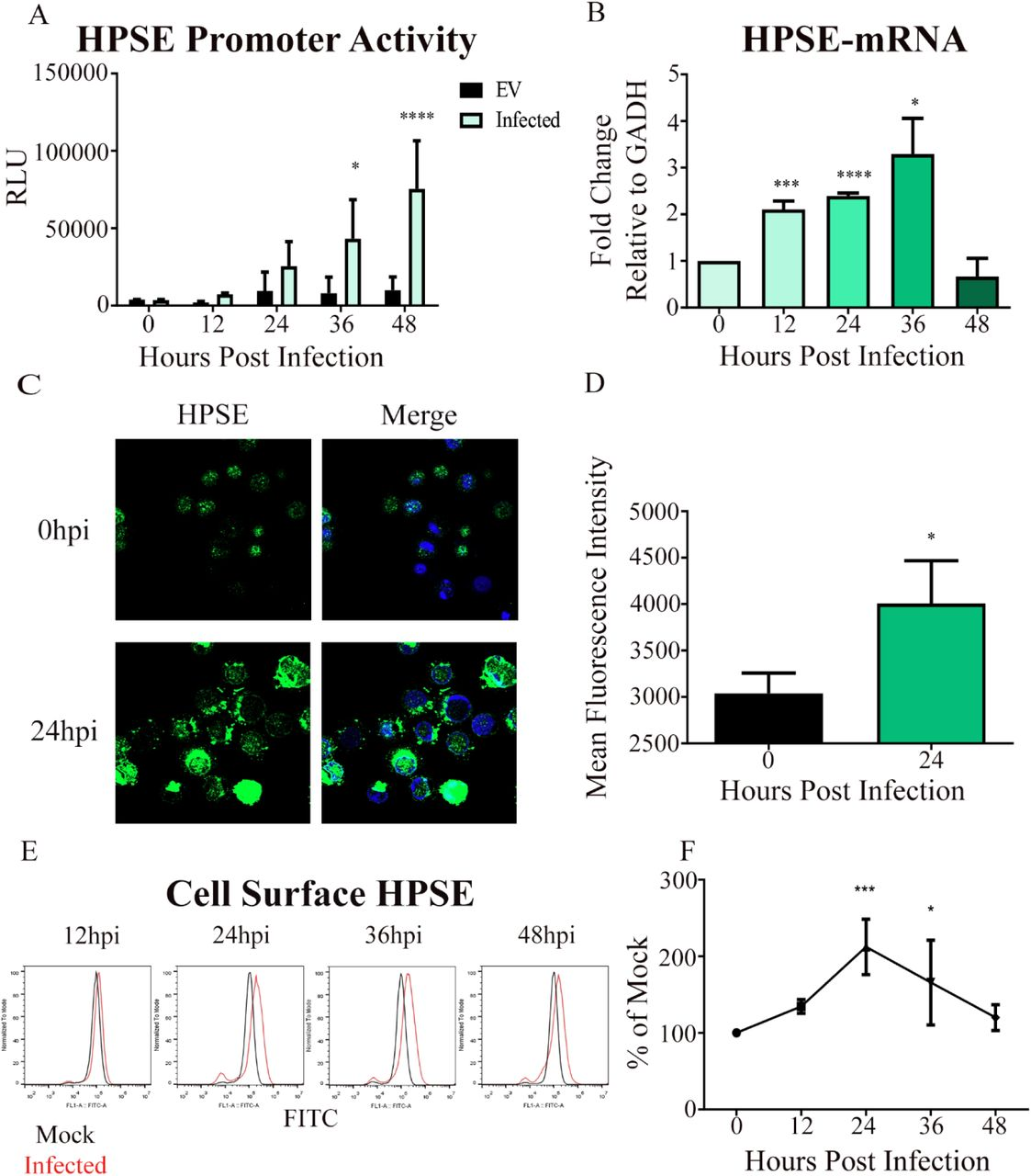Host Enzymes Heparanase and Cathepsin L Promote Herpes