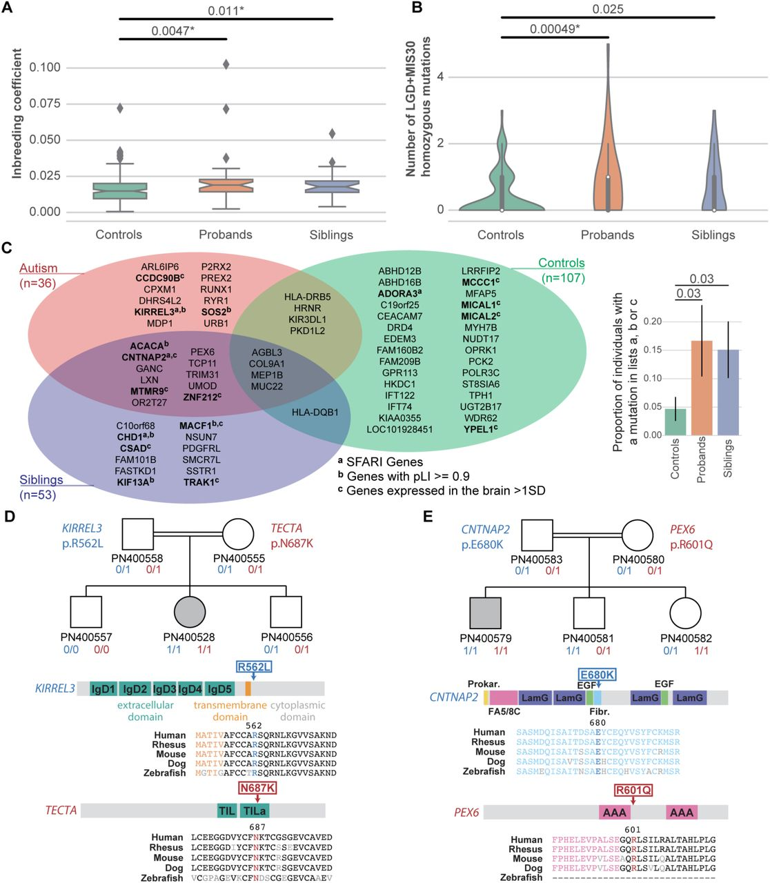 Both rare and common genetic variants contribute to autism in the