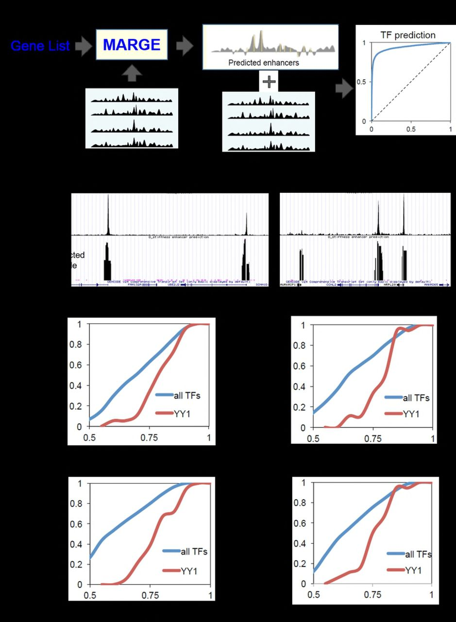 Integrative data analysis predicts YY1 as a Cis-regulator in the 3D