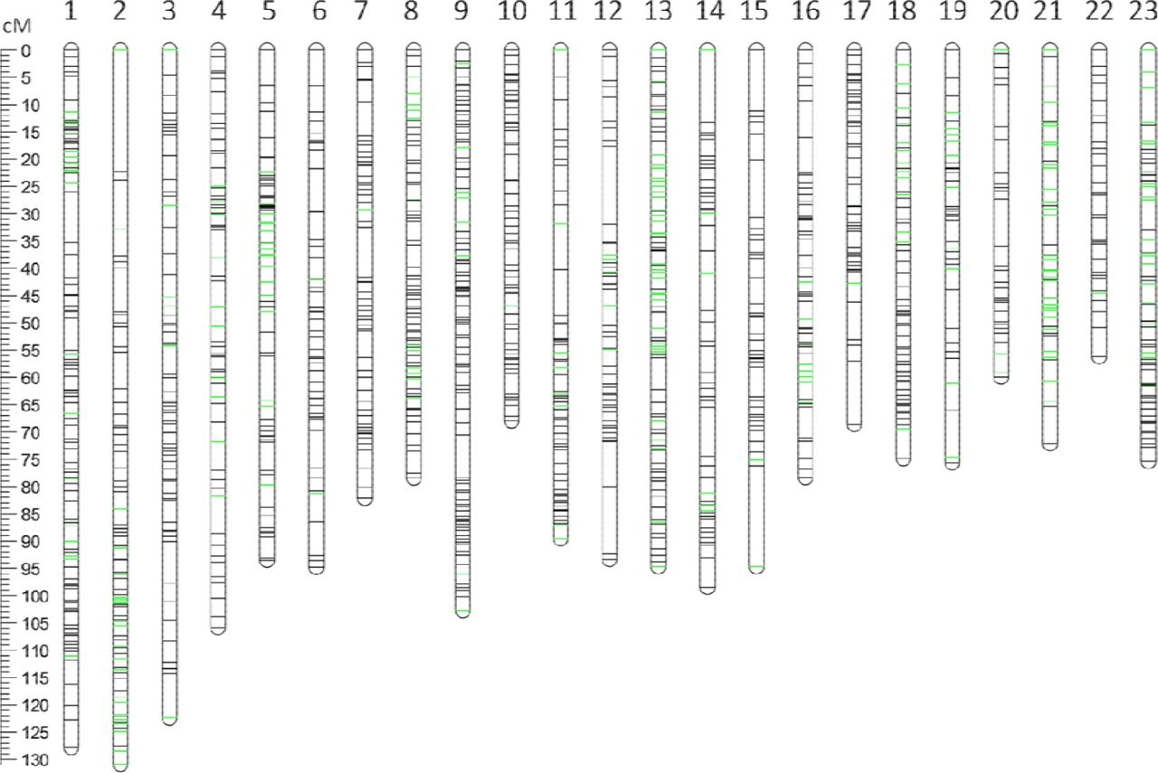 The first genetic linkage map for Fraxinus pennsylvanica and ... on wild type, reciprocal cross, pedigree chart, genetic drift, genetic map distance, punnett square, genetic sequence map, drosophila genetic map, genetic atlas, genetic heredity map, genetic migration map, genetic screen, monohybrid cross, genetic combination, genetic chart, omim gene map, genetic map of mexico, cell cycle map, genetic diversity map, cancer map, genetic gene map, human genetic map, genetic code map, dihybrid cross, test cross, fruit fly genetic map, genetic mapping, genetic family map,