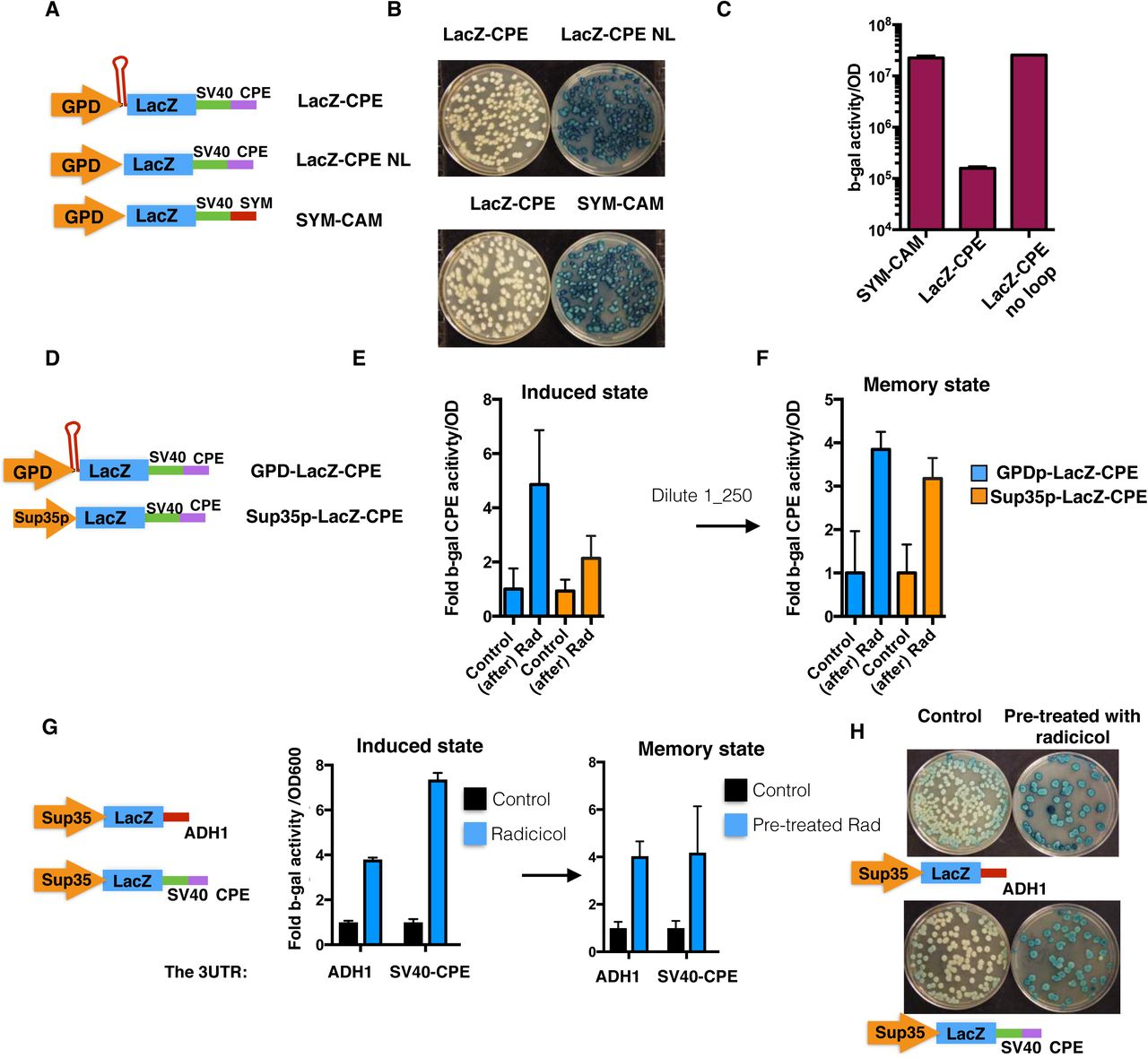 Transient Hsp90 suppression promotes a heritable change in protein