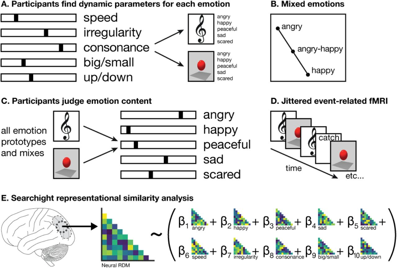 Visual and auditory brain areas share a neural code for perceived