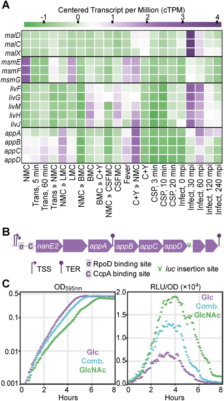 High-resolution analysis of the pneumococcal transcriptome