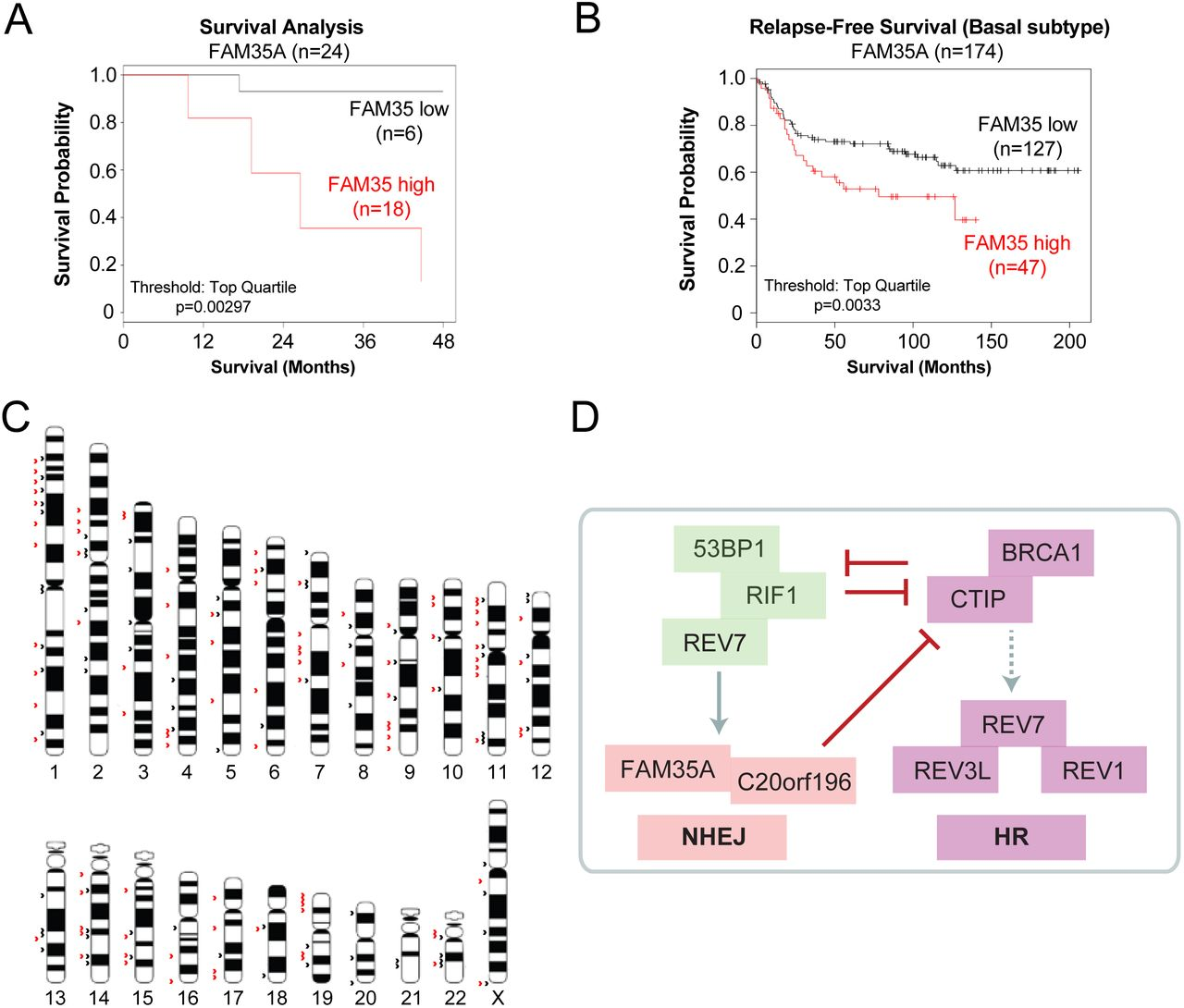 FAM35A co-operates with REV7 to coordinate DNA double-strand break