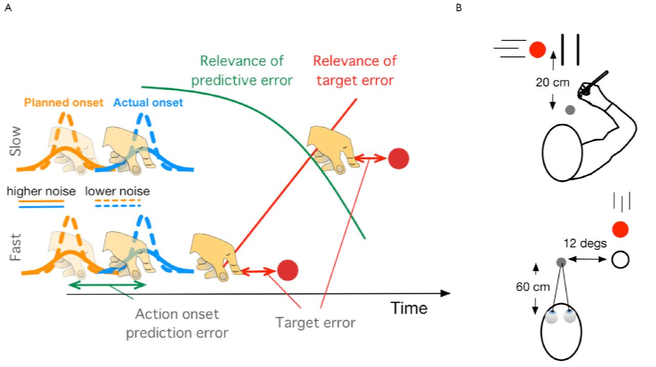 Prediction and final temporal errors are used for trial-to