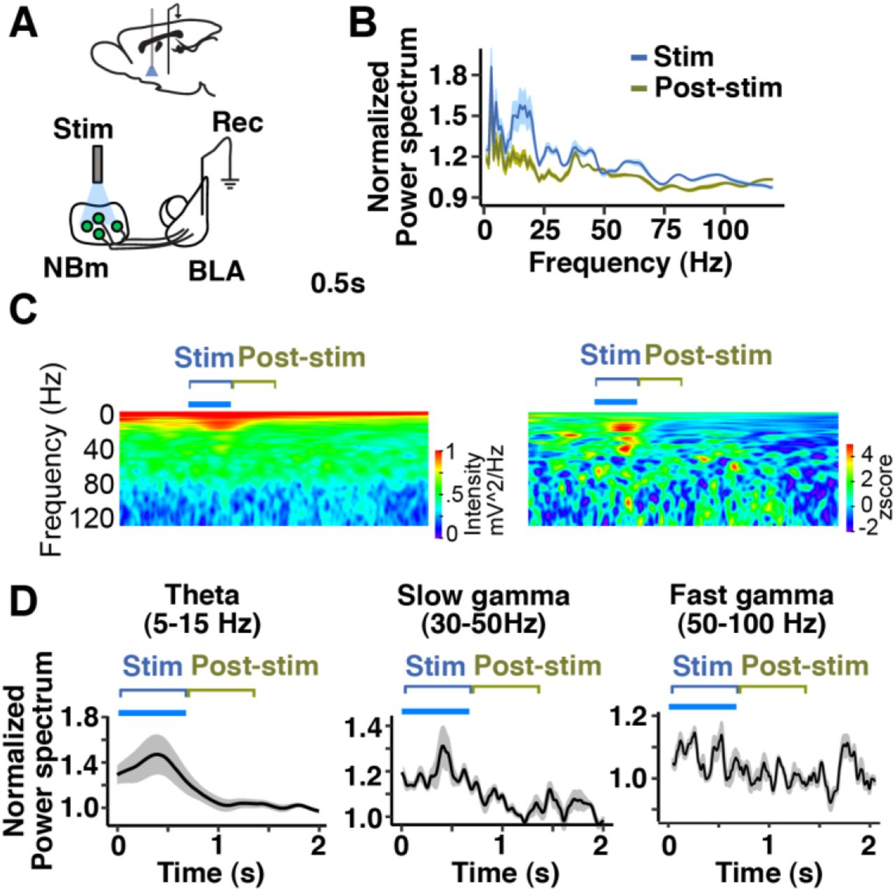 Basal forebrain and brainstem cholinergic neurons