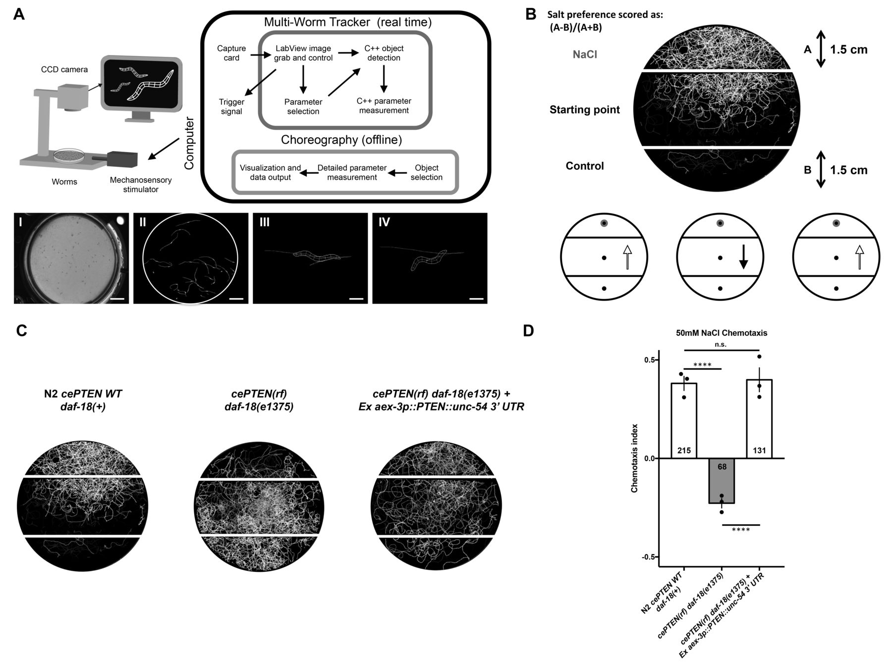 CRISPR-Cas9 human gene replacement and phenomic characterization in