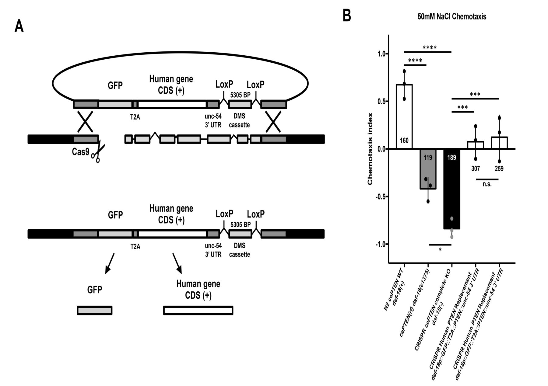 CRISPR-Cas9 gene replacement and phenomic characterization in ... on