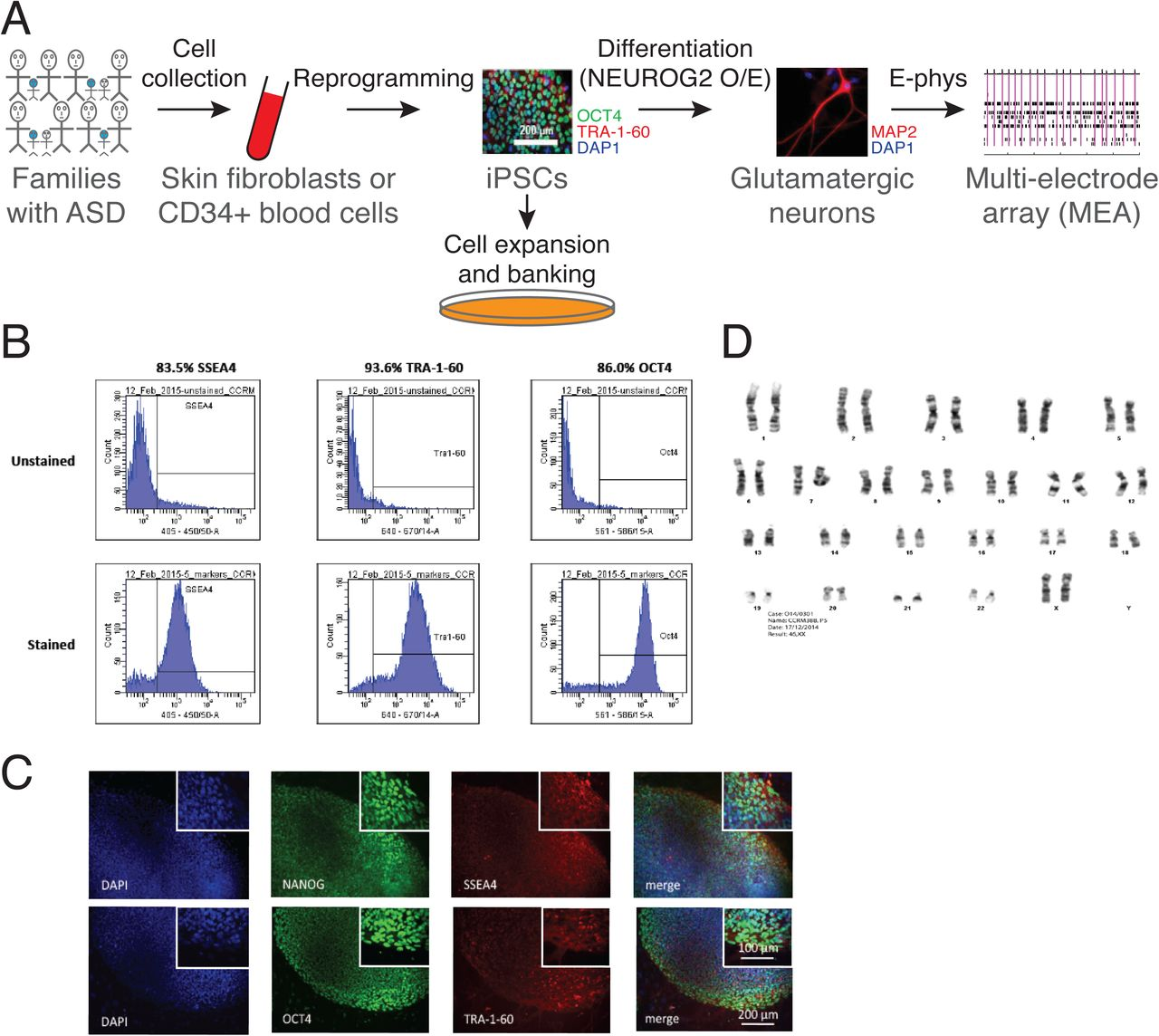 CNTN5−/+ or EHMT2−/+ iPSC-Derived Neurons from Individuals with