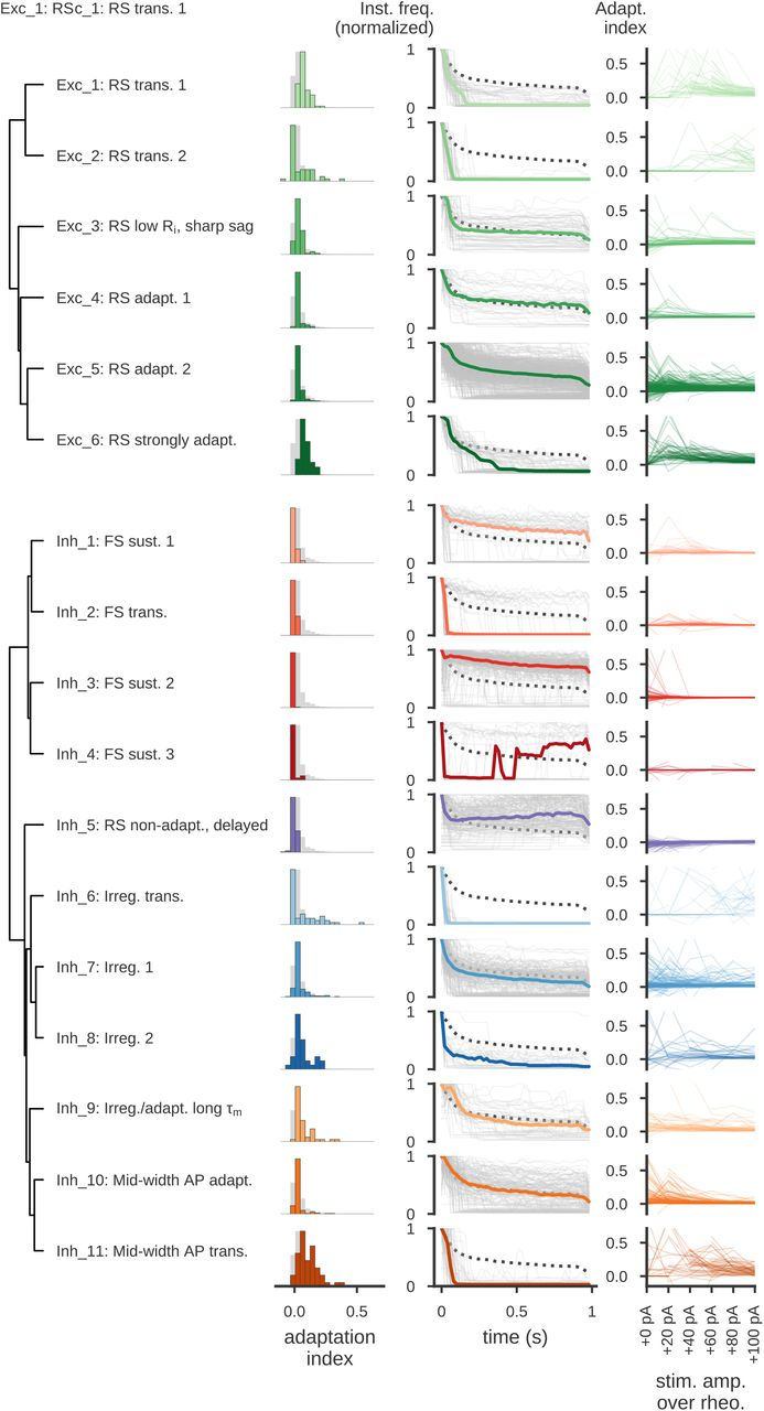Classification of electrophysiological and morphological types in