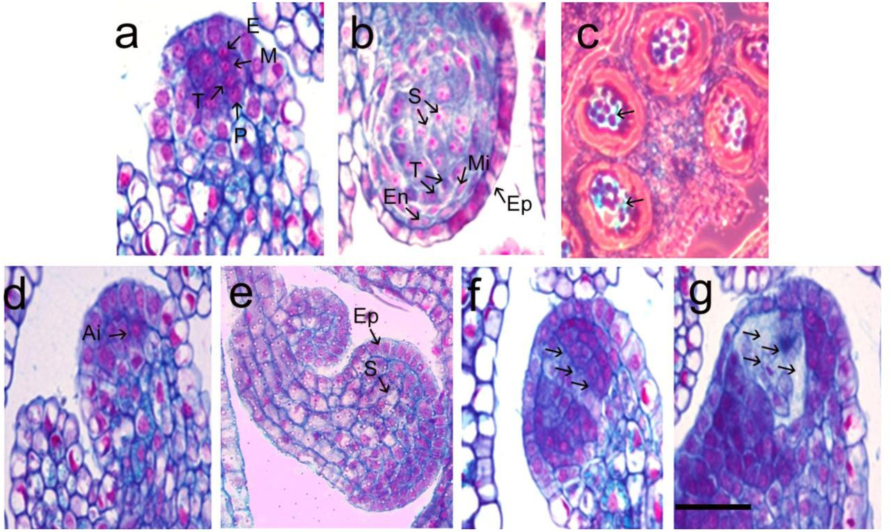 Comparative analysis of anther development in natural
