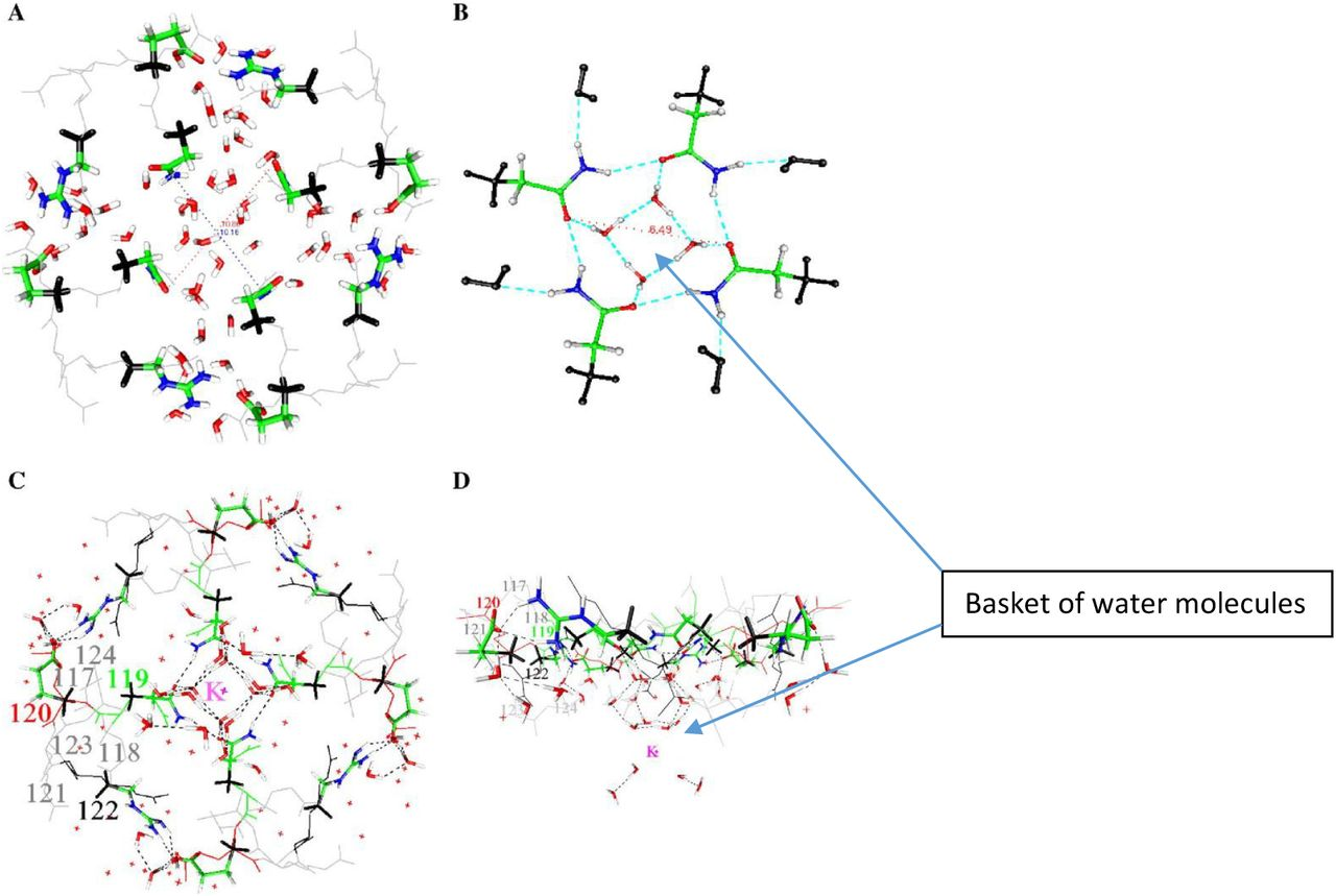 The Role of Proton Transport in Gating Current in a Voltage