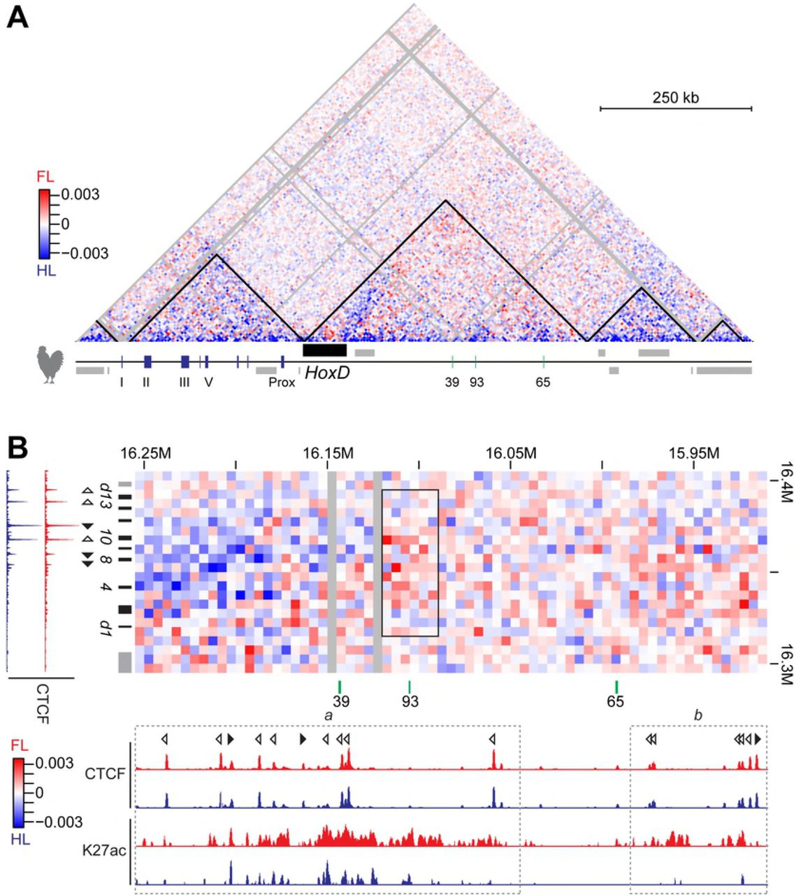 Conservation and Variations of Bimodal HoxD Gene Regulation