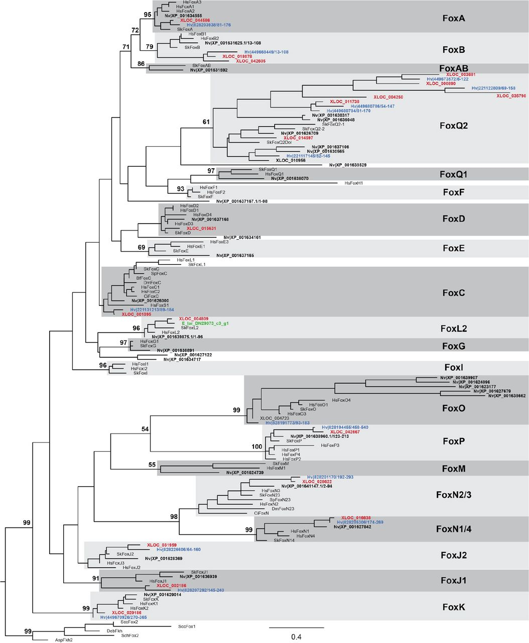 The genome of the jellyfish Clytia hemisphaerica and the evolution